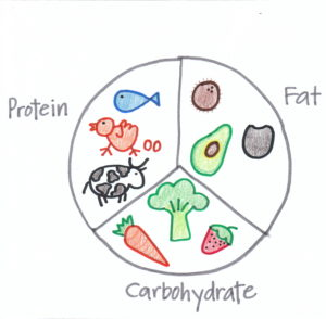 Macronutrient Chart Child Drawing